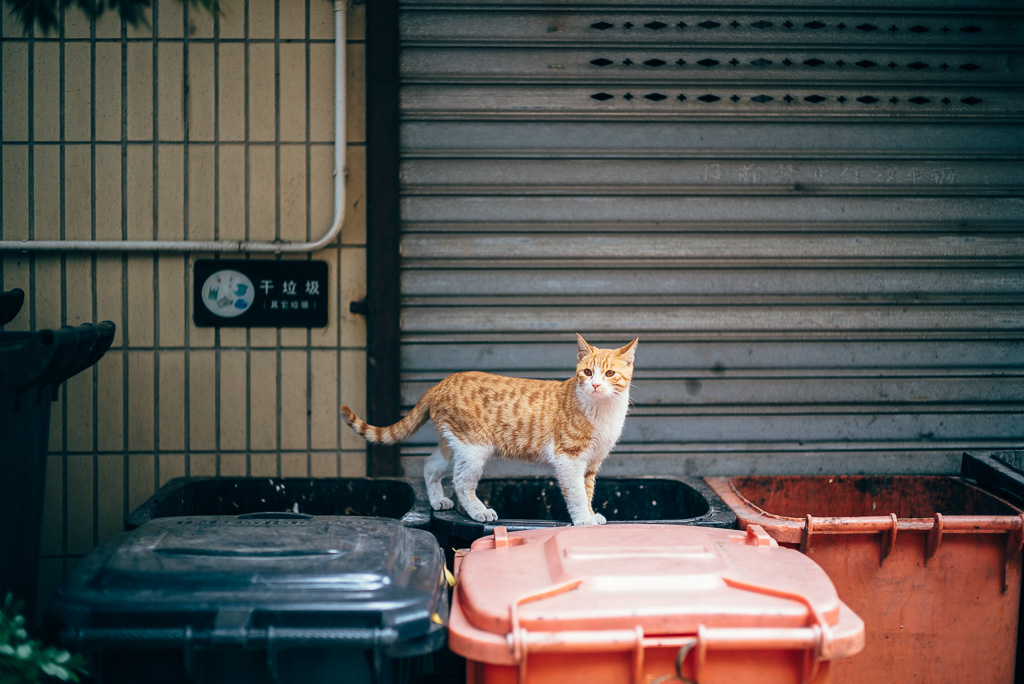 Stray Cat by Gino Zhang, 於 Flickr