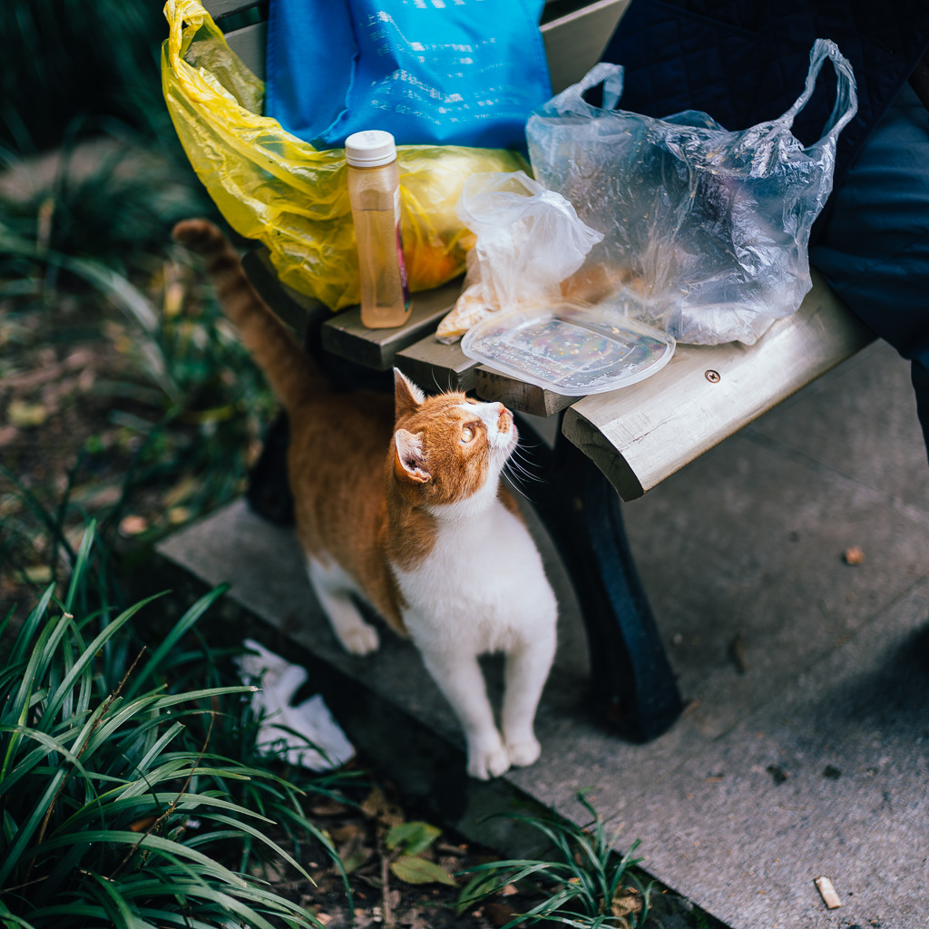 """Stealing Free Lunch"" by Gino Zhang, on Flickr, on 500px"
