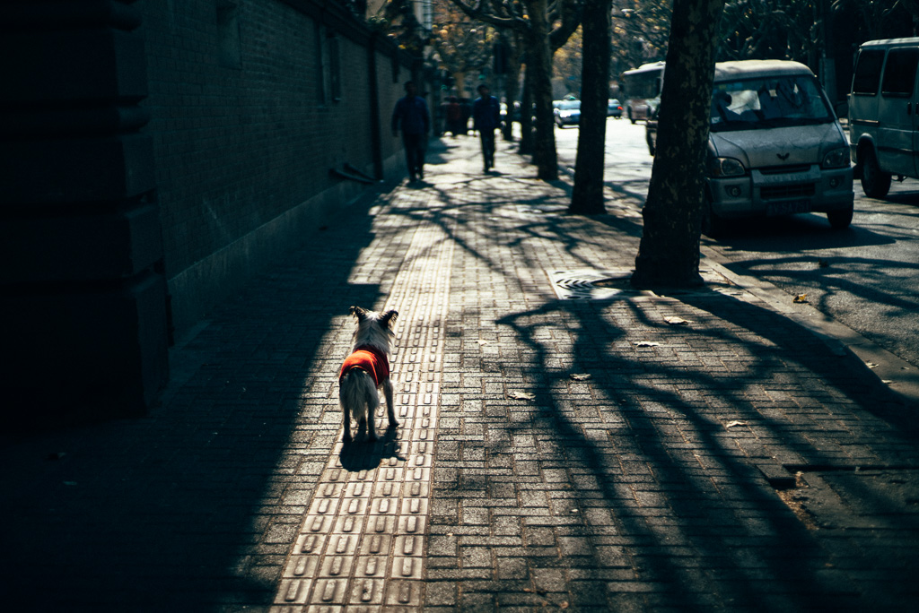 A Dog Was Waiting for Somebody by Gino Zhang, on Flickr
