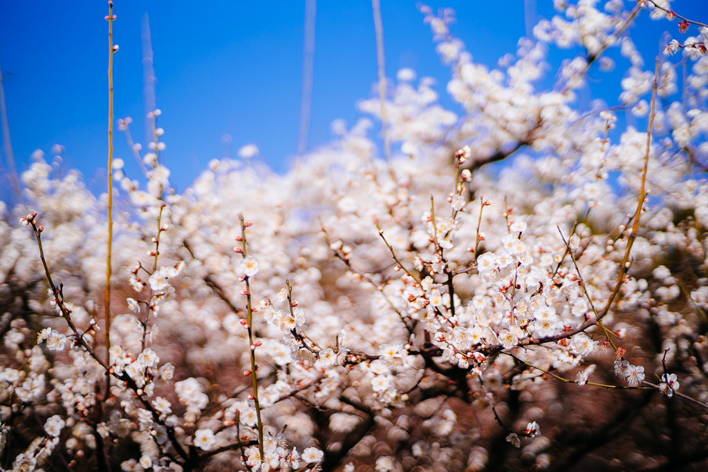 20150219-100410 by Gino Zhang, on Flickr
