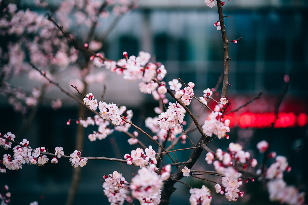 """20160311-170230_01735"" by Gino Zhang, on Flickr, on 500px"